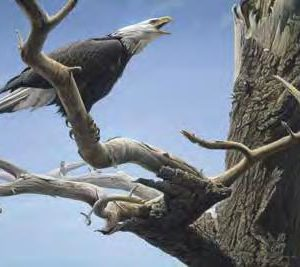 A painting of a bald eagle screaming as it sits on a dead tree branch