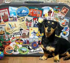 a black & tan dachshund is sitting in from of a suitcase covered with world travel stickers