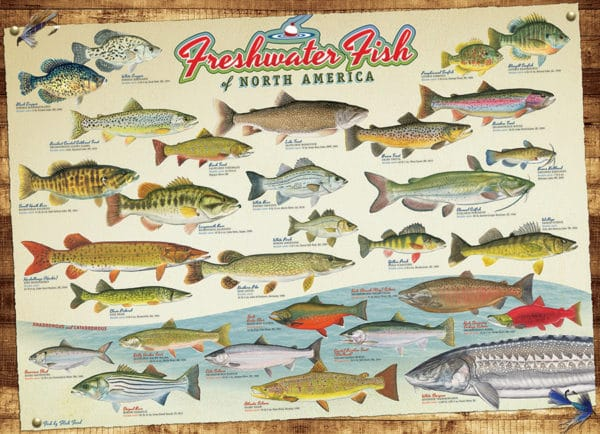 Freshwater Fish of North America puzzle