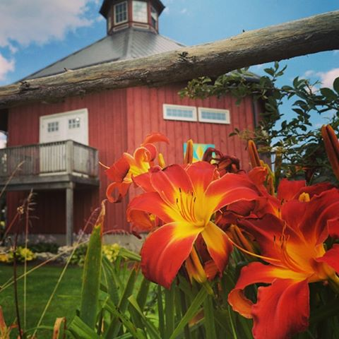 Announcing the Real Estate Listing of Crazy 8 Barn & Garden