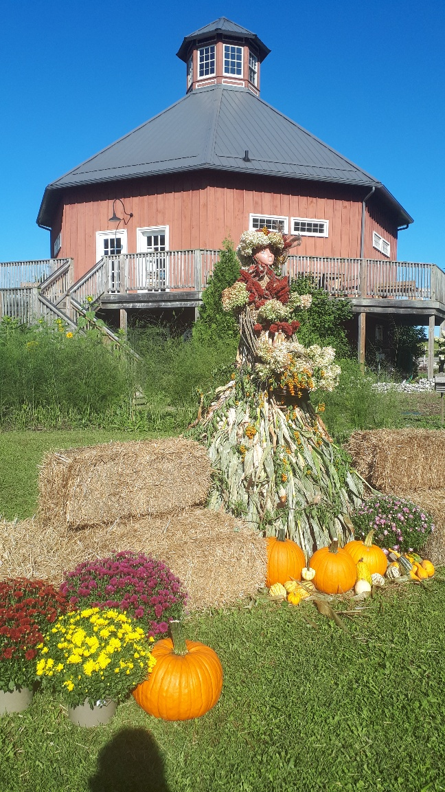 Corn queen in the midst of straw bales with mums and pumpkins